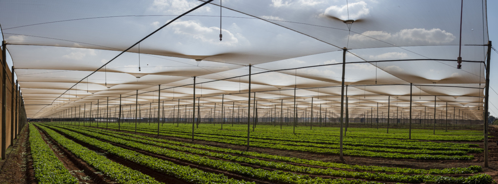 agricultural and commercial shadenetting suppliers