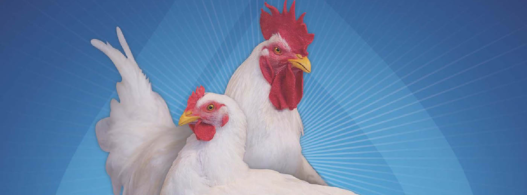 Ross Poultry Breeders