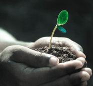 Fertilizer Chemicals and Their Role in Modern Agriculture