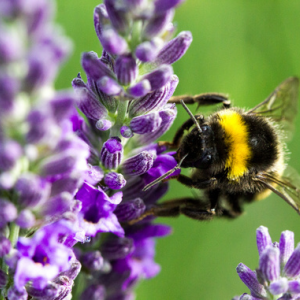 Bee-friendly gardening for agriculture