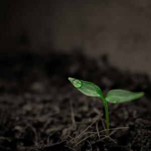 Agrifood, Soil Care Agricultural Products, Farming Suppliers