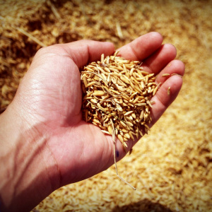 Grain Storage, Seed Companies, Seed Suppliers in South Africa
