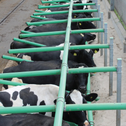 Cow Welfare - Agrifoods Directory