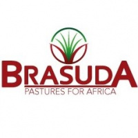 Seed Suppliers South Africa Seed Companies Agrifoodsa